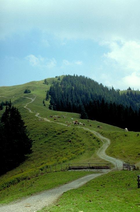 Wanderweg direkt auf dem Rücken eines Bergdrachens