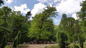 Geomantie der Düwelsteene in Heiden im Naturpark Hohe Mark