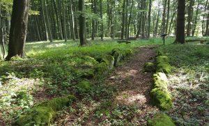 Das Großsteinkammergrab in Warburg Rimbeck der Wartbergkultur